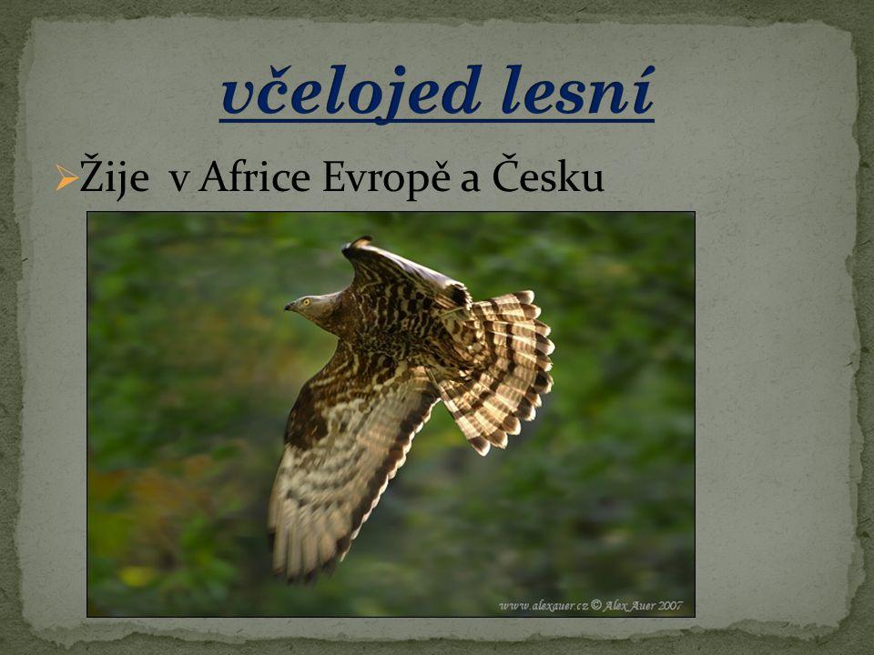  Žije v Africe Evropě a Česku