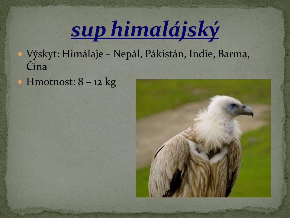 Výskyt: Himálaje – Nepál, Pákistán, Indie, Barma, Čína Hmotnost: 8 – 12 kg
