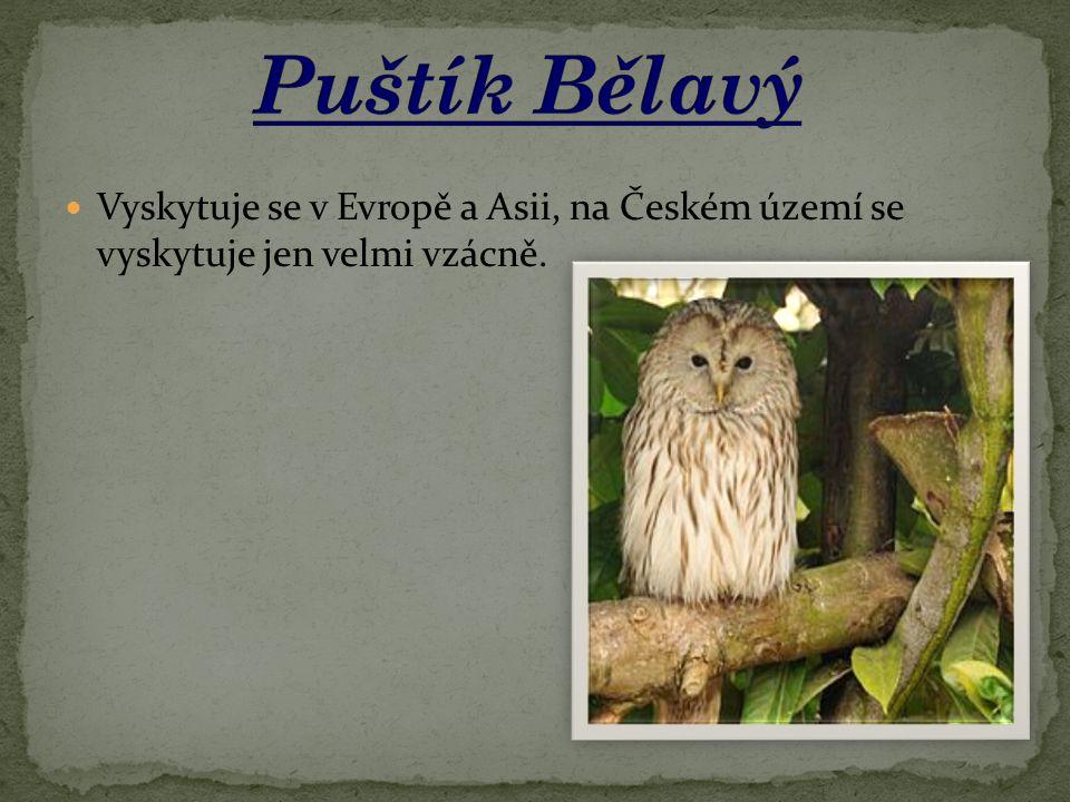 Vyskytuje se v Evropě a Asii, na Českém území se vyskytuje jen velmi vzácně.