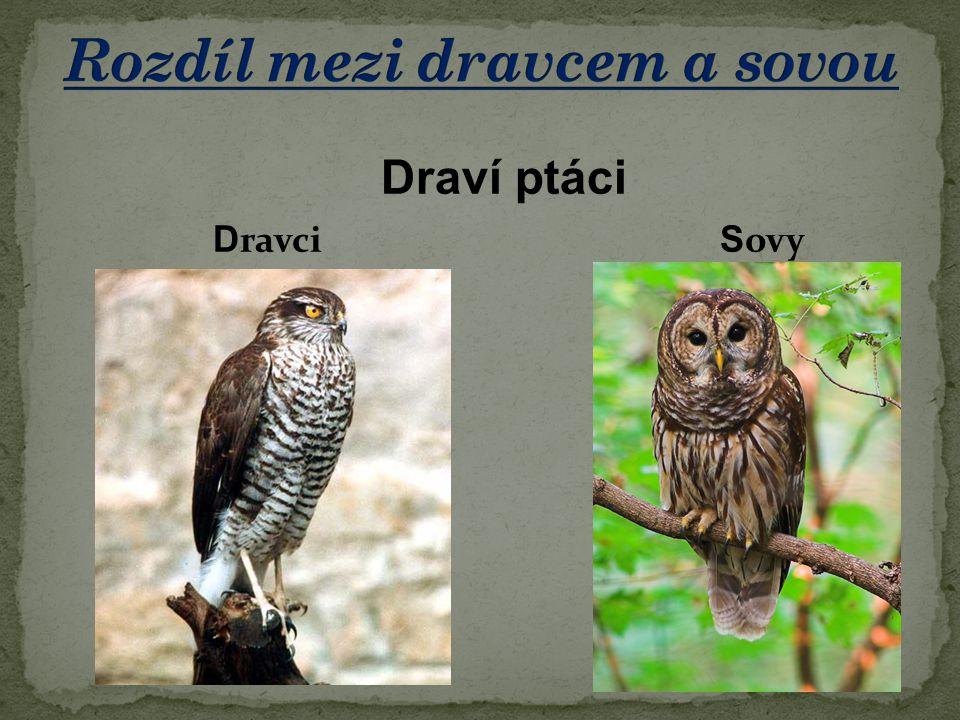 Draví ptáci D ravci S ovy