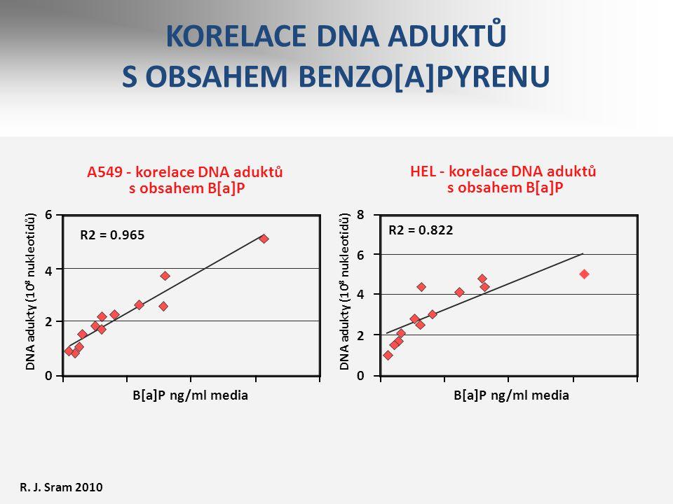 A549 - korelace DNA aduktů s obsahem B[a]P DNA adukty (10 8 nukleotidů) B[a]P ng/ml media HEL - korelace DNA aduktů s obsahem B[a]P R2 = 0.822 R2 = 0.