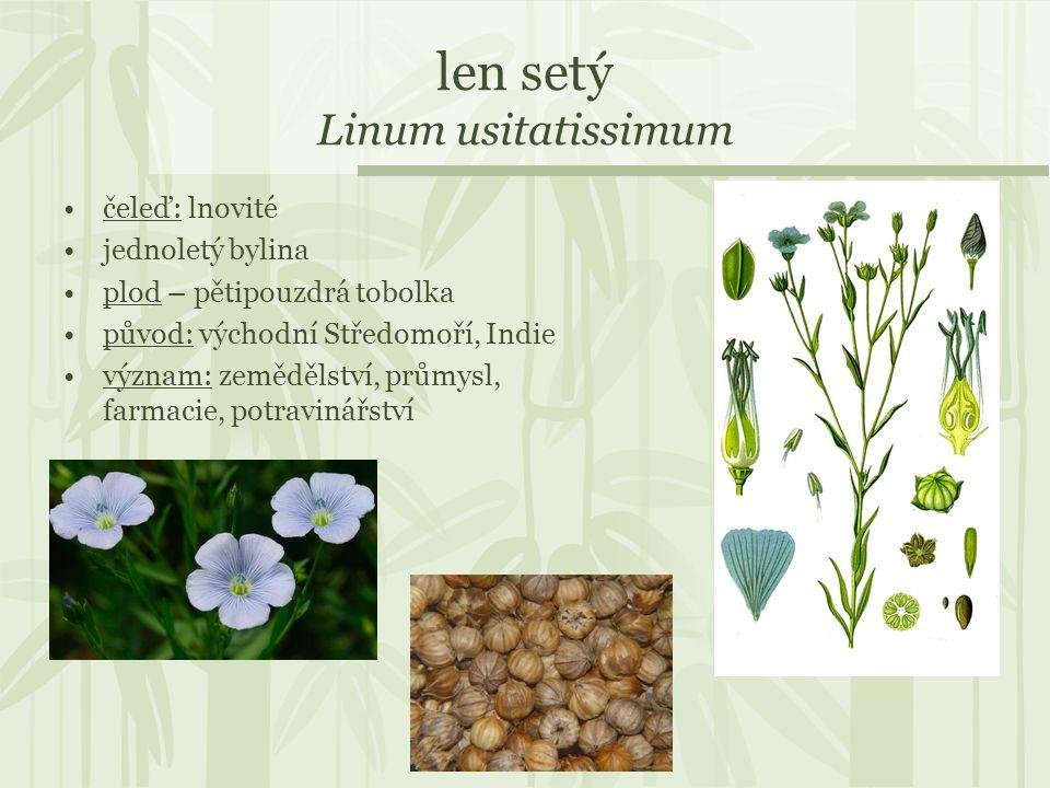 len setý Linum usitatissimum čeleď: lnovité jednoletý bylina plod – pětipouzdrá tobolka původ: východní Středomoří, Indie význam: zemědělství, průmysl