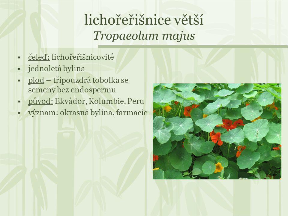lichořeřišnice větší Tropaeolum majus čeleď: lichořeřišnicovité jednoletá bylina plod – třípouzdrá tobolka se semeny bez endospermu původ: Ekvádor, Ko