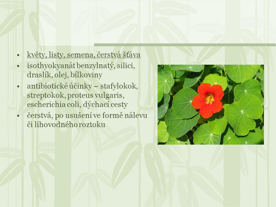 květy, listy, semena, čerstvá šťáva isothyokyanát benzylnatý, silici, draslík, olej, bílkoviny antibiotické účinky – stafylokok, streptokok, proteus v