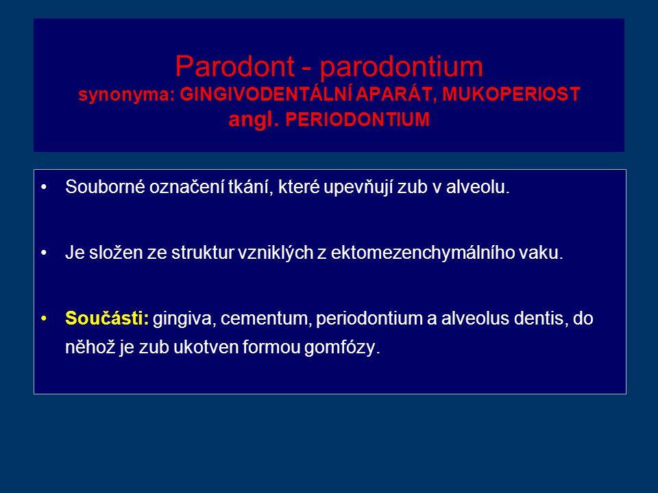 Parodont - parodontium synonyma: GINGIVODENTÁLNÍ APARÁT, MUKOPERIOST angl.