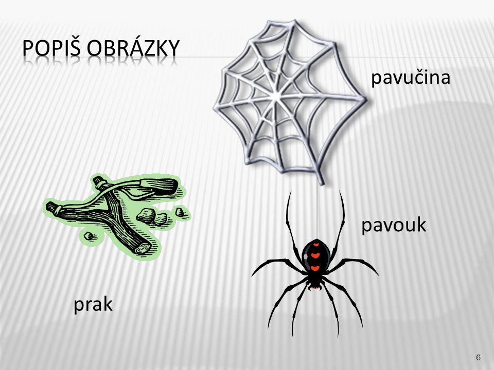 pavučina 6 prak pavouk