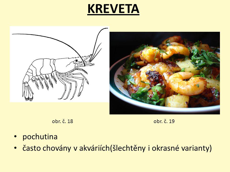 KREVETA pochutina často chovány v akváriích(šlechtěny i okrasné varianty) obr. č. 19obr. č. 18