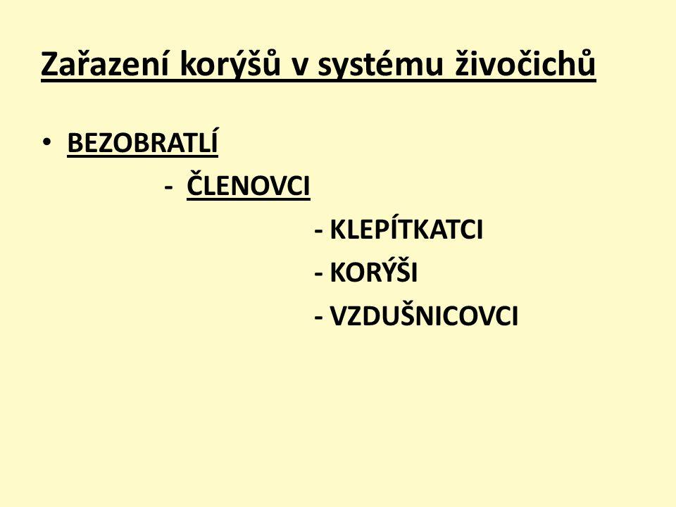 Zařazení korýšů v systému živočichů BEZOBRATLÍ - ČLENOVCI - KLEPÍTKATCI - KORÝŠI - VZDUŠNICOVCI