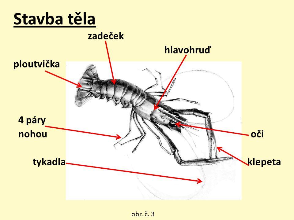 KRAB široký oválný a plochý krunýř mohutná klepeta nohy do stran, zadeček redukovaný obr. č. 13