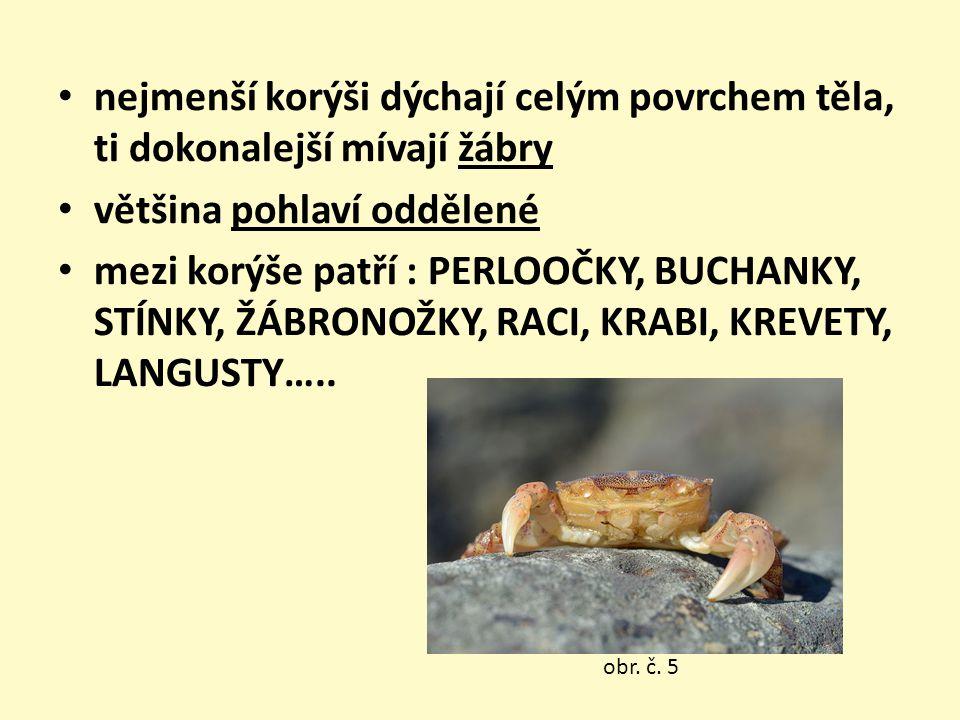 nejmenší korýši dýchají celým povrchem těla, ti dokonalejší mívají žábry většina pohlaví oddělené mezi korýše patří : PERLOOČKY, BUCHANKY, STÍNKY, ŽÁBRONOŽKY, RACI, KRABI, KREVETY, LANGUSTY…..