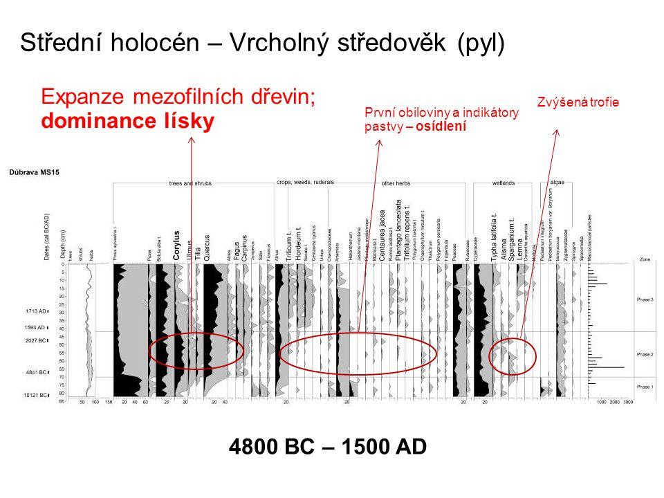 Střední holocén – Vrcholný středověk (pyl) Expanze mezofilních dřevin; dominance lísky První obiloviny a indikátory pastvy – osídlení Zvýšená trofie 4