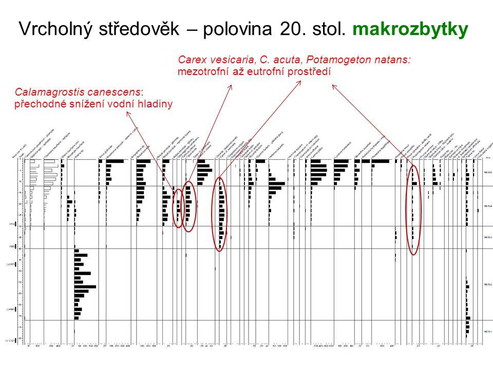 Vrcholný středověk – polovina 20. stol. makrozbytky Carex vesicaria, C. acuta, Potamogeton natans: mezotrofní až eutrofní prostředí Calamagrostis cane
