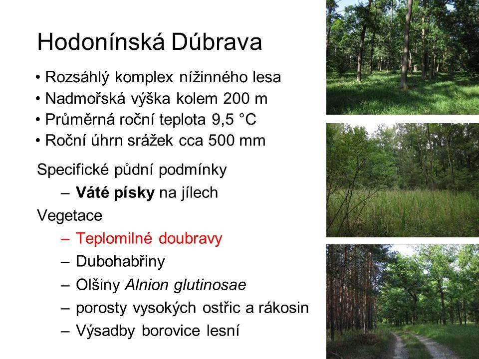 Hodonínská Dúbrava Specifické půdní podmínky –Váté písky na jílech Vegetace –Teplomilné doubravy –Dubohabřiny –Olšiny Alnion glutinosae –porosty vysok