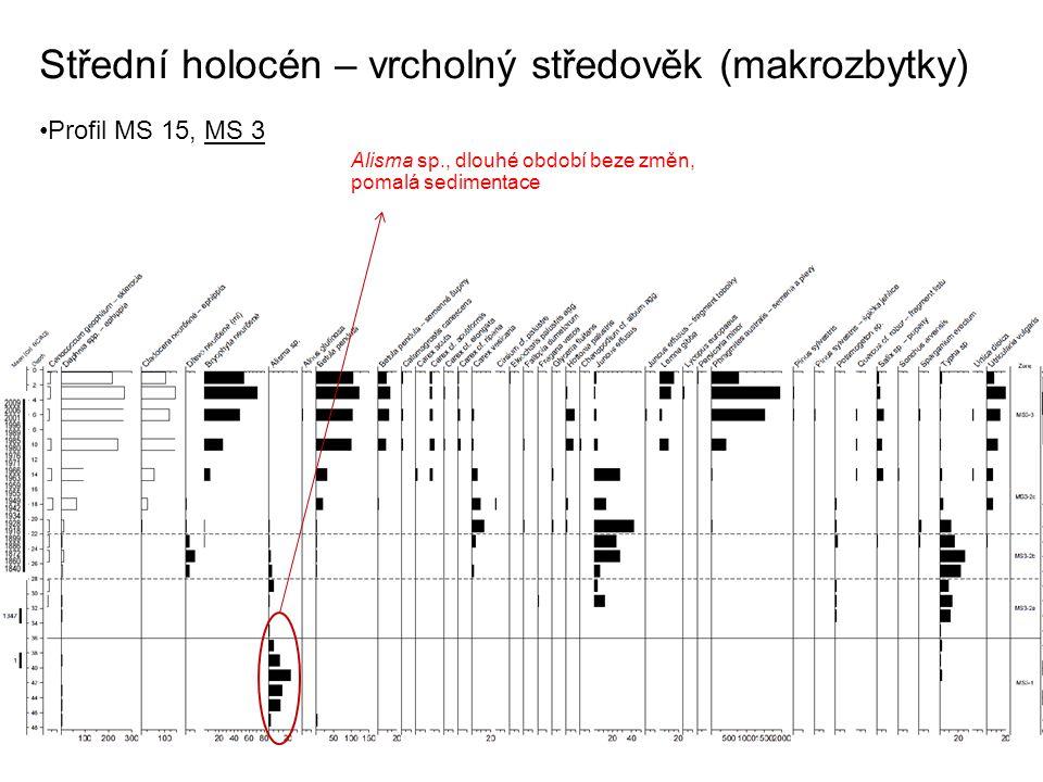 Střední holocén – vrcholný středověk (makrozbytky) Profil MS 15, MS 3 Alisma sp., dlouhé období beze změn, pomalá sedimentace