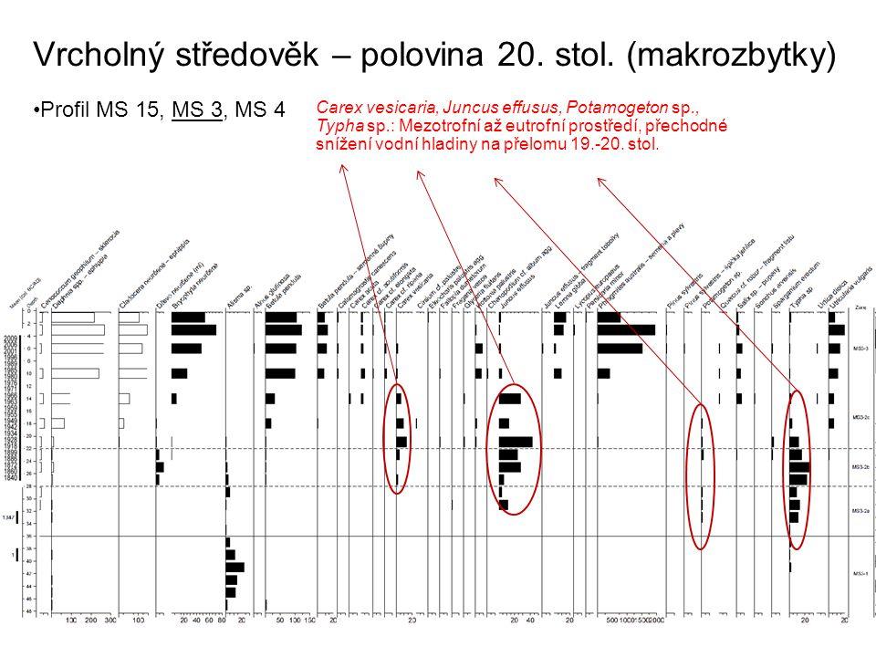 Vrcholný středověk – polovina 20. stol. (makrozbytky) Profil MS 15, MS 3, MS 4 Carex vesicaria, Juncus effusus, Potamogeton sp., Typha sp.: Mezotrofní