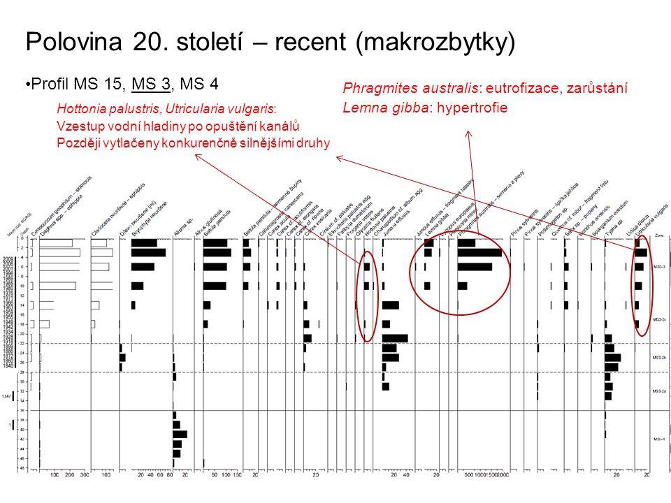 Polovina 20. století – recent (makrozbytky) Profil MS 15, MS 3, MS 4 Phragmites australis: eutrofizace, zarůstání Lemna gibba: hypertrofie Hottonia pa