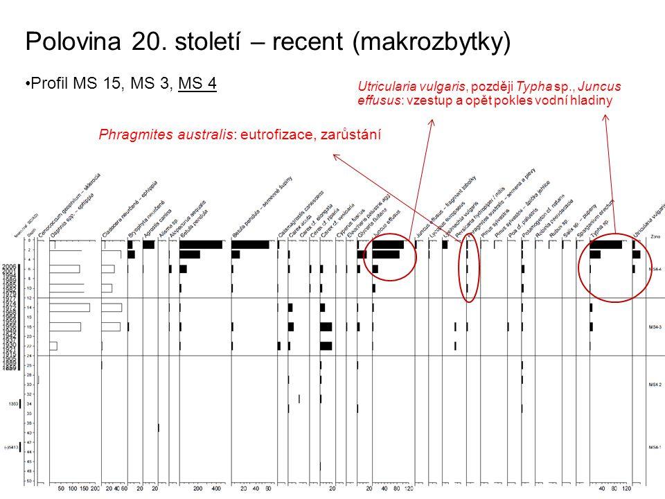 Polovina 20. století – recent (makrozbytky) Profil MS 15, MS 3, MS 4 Phragmites australis: eutrofizace, zarůstání Utricularia vulgaris, později Typha