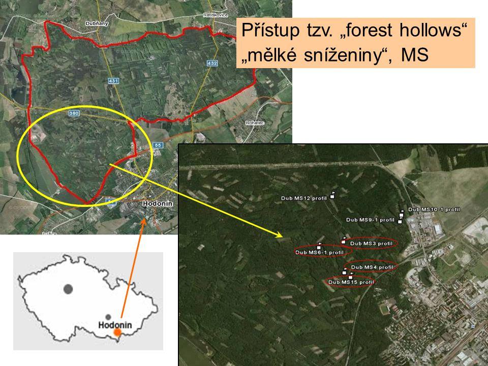 """Přístup tzv. """"forest hollows"""" """"mělké sníženiny"""", MS"""