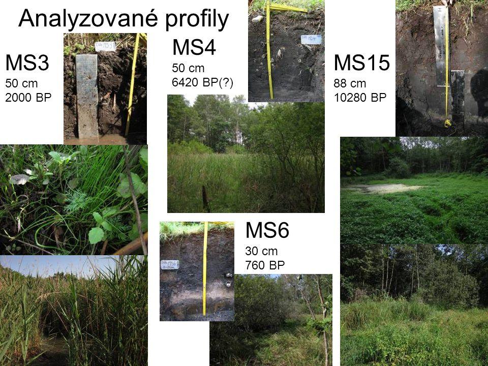 MS3 50 cm 2000 BP MS15 88 cm 10280 BP Analyzované profily MS4 50 cm 6420 BP(?) MS6 30 cm 760 BP