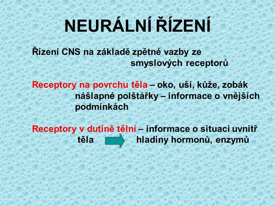 NEURÁLNÍ ŘÍZENÍ Řízení CNS na základě zpětné vazby ze smyslových receptorů Receptory na povrchu těla – oko, uši, kůže, zobák nášlapné polštářky – info