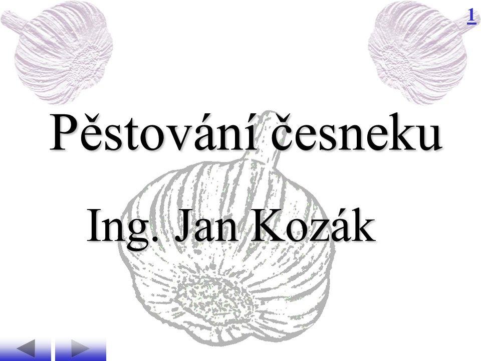 1 Pěstování česneku Ing. Jan Kozák