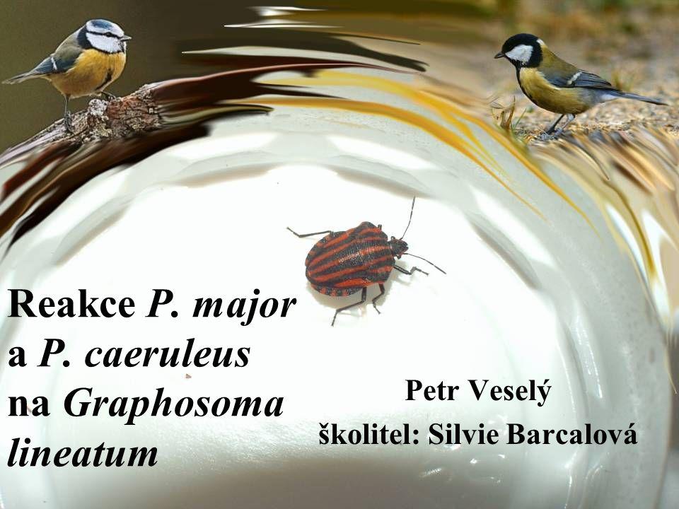 Reakce P. major a P. caeruleus na Graphosoma lineatum Petr Veselý školitel: Silvie Barcalová