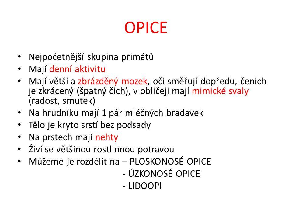 GUERÉZA PLÁŠTÍKOVÁ Obr. 8