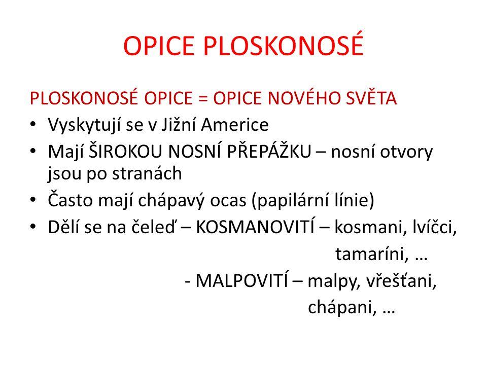 MAKAK ČERVENOLÍCÍ Obr. 9