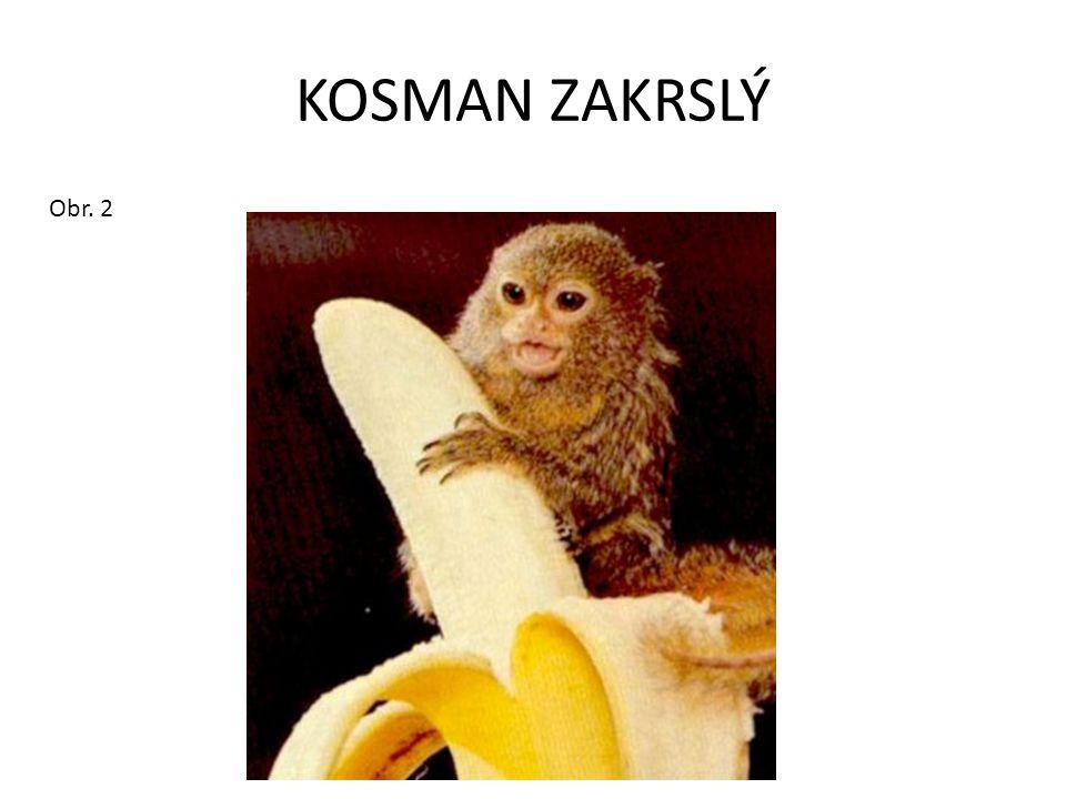 KOSMAN ZAKRSLÝ Obr. 2