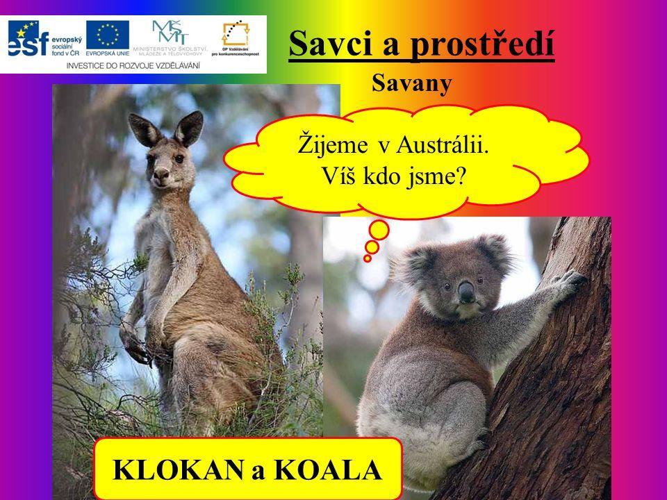 Savci a prostředí Savany Žijeme v Austrálii. Víš kdo jsme? KLOKAN a KOALA