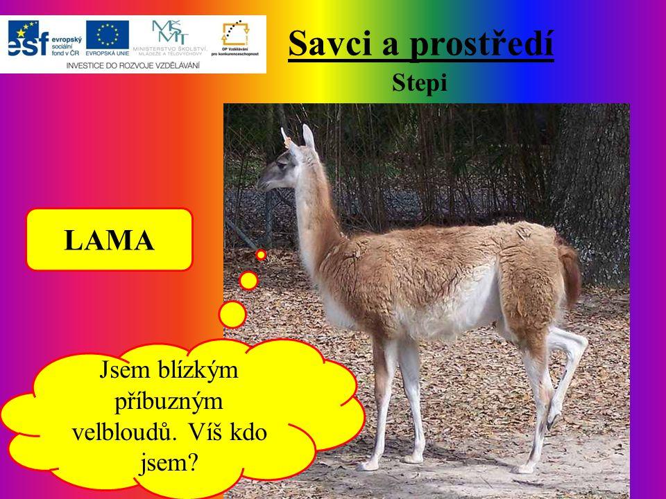 Savci a prostředí Stepi Jsem blízkým příbuzným velbloudů. Víš kdo jsem? LAMA