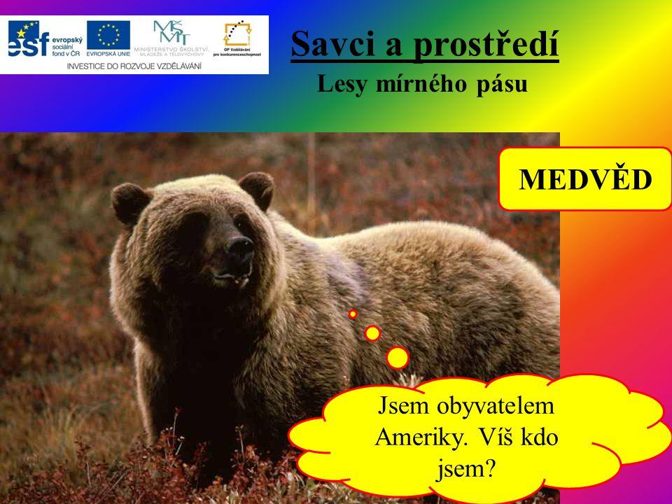 Savci a prostředí Lesy mírného pásu Jsem obyvatelem Ameriky. Víš kdo jsem? MEDVĚD