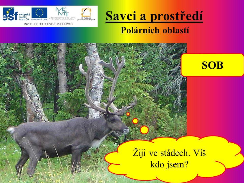 Savci a prostředí Polárních oblastí Žiji ve stádech. Víš kdo jsem? SOB
