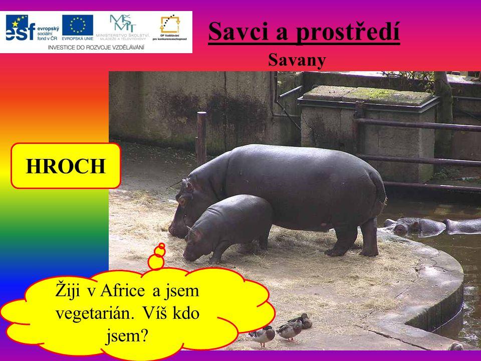 Savci a prostředí Savany Žiji v Africe a jsem vegetarián. Víš kdo jsem? HROCH