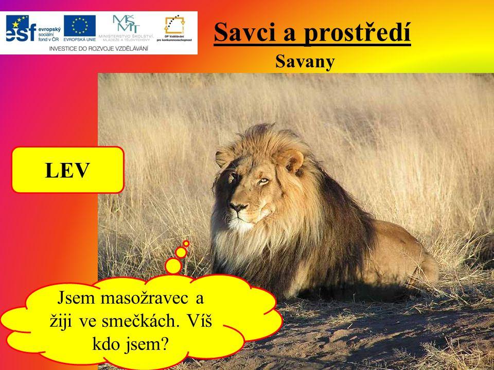 Savci a prostředí Savany Jsem masožravec a žiji ve smečkách. Víš kdo jsem? LEV