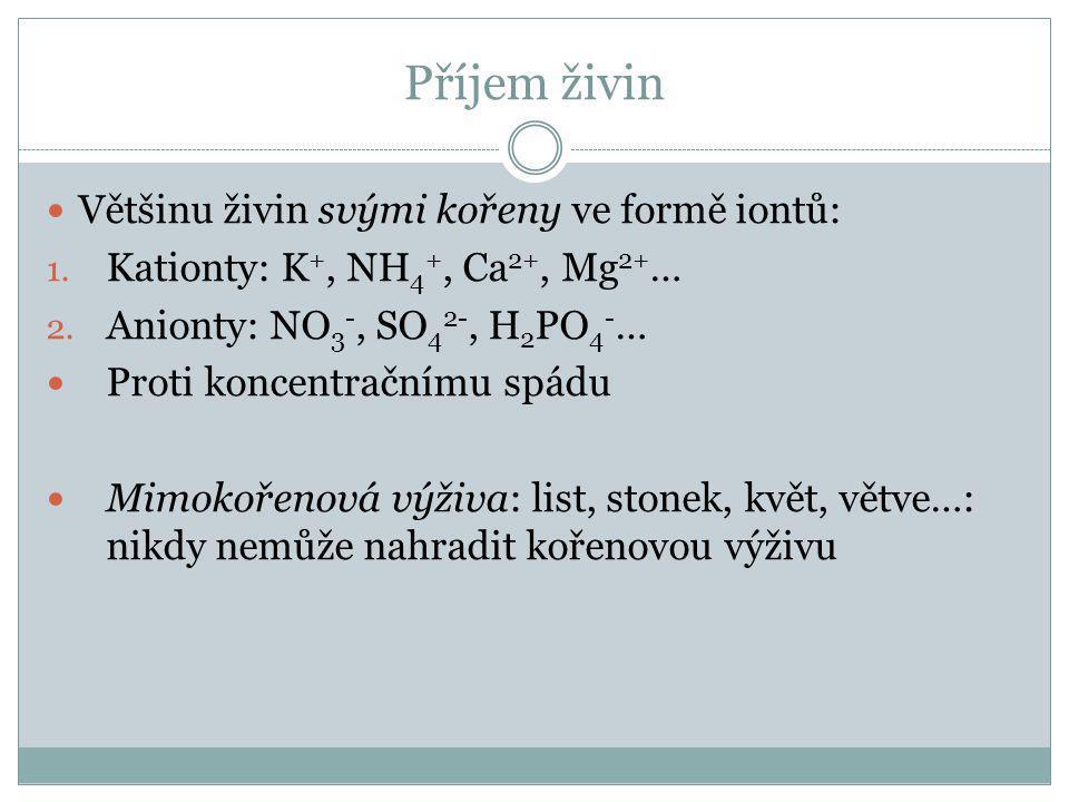 Příjem živin Většinu živin svými kořeny ve formě iontů: 1.