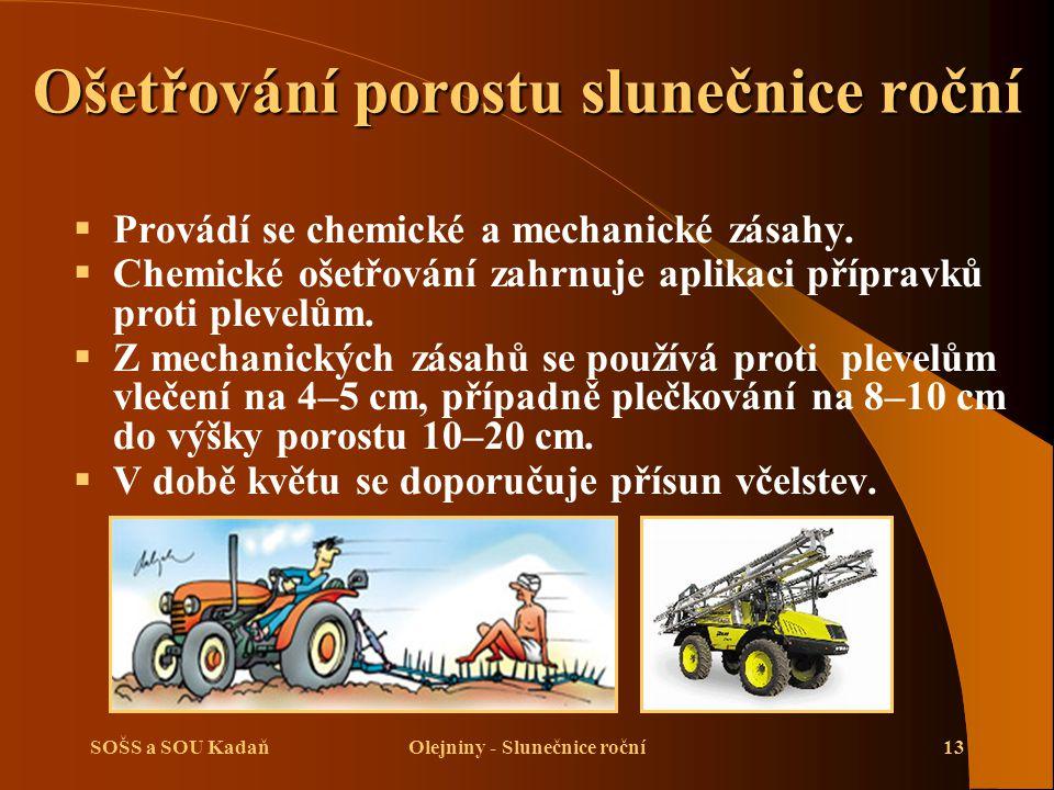 SOŠS a SOU KadaňOlejniny - Slunečnice roční13 Ošetřování porostu slunečnice roční  Provádí se chemické a mechanické zásahy.