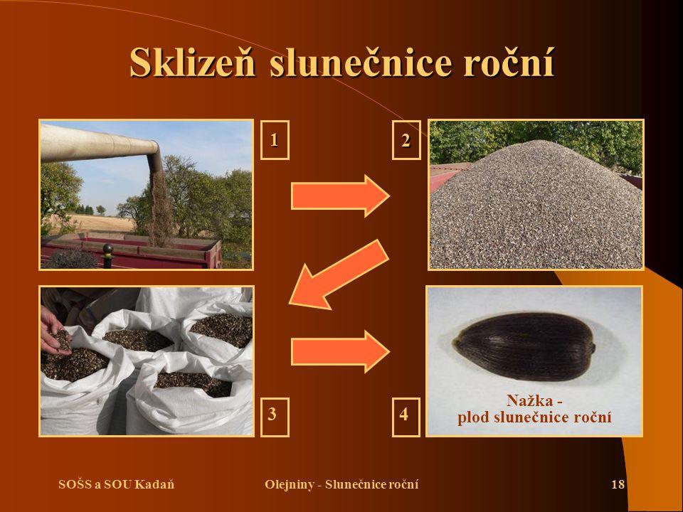 SOŠS a SOU KadaňOlejniny - Slunečnice roční18 12 34 Nažka - plod slunečnice roční Sklizeň slunečnice roční