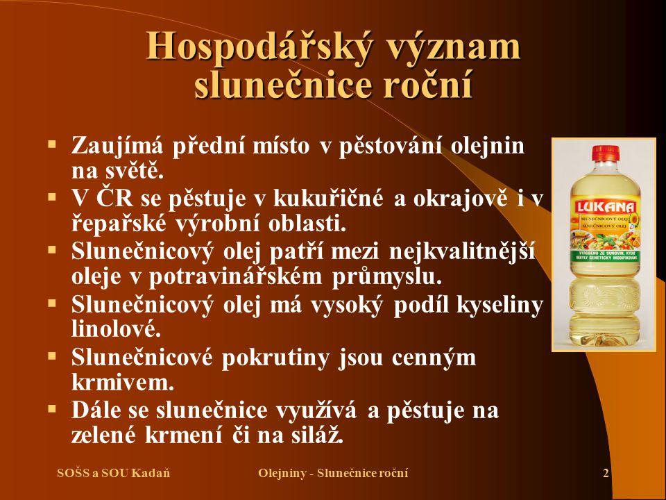 SOŠS a SOU KadaňOlejniny - Slunečnice roční2 Hospodářský význam slunečnice roční  Zaujímá přední místo v pěstování olejnin na světě.