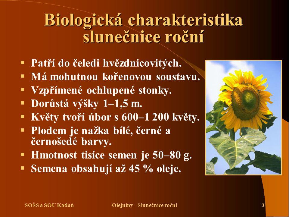 SOŠS a SOU KadaňOlejniny - Slunečnice roční14 Sklizeň slunečnice roční  Musíme rozlišovat, zda se slunečnice pěstuje na semeno, na siláž či na zeleno.