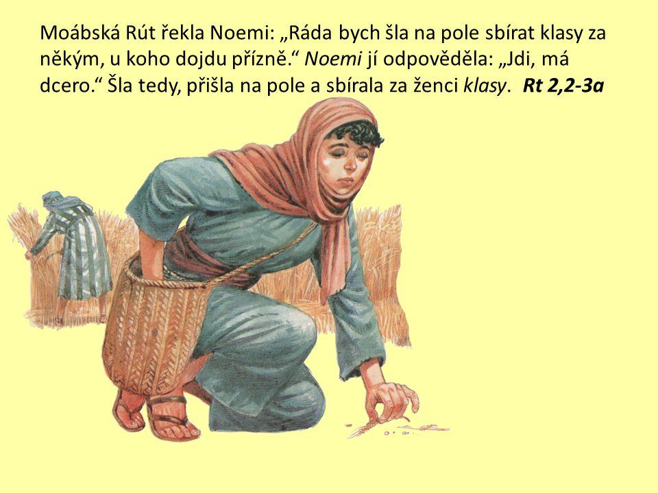 """Moábská Rút řekla Noemi: """"Ráda bych šla na pole sbírat klasy za někým, u koho dojdu přízně. Noemi jí odpověděla: """"Jdi, má dcero. Šla tedy, přišla na pole a sbírala za ženci klasy."""