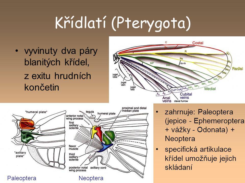 Křídlatí (Pterygota) vyvinuty dva páry blanitých křídel, z exitu hrudních končetin zahrnuje: Paleoptera (jepice - Ephemeroptera + vážky - Odonata) + N