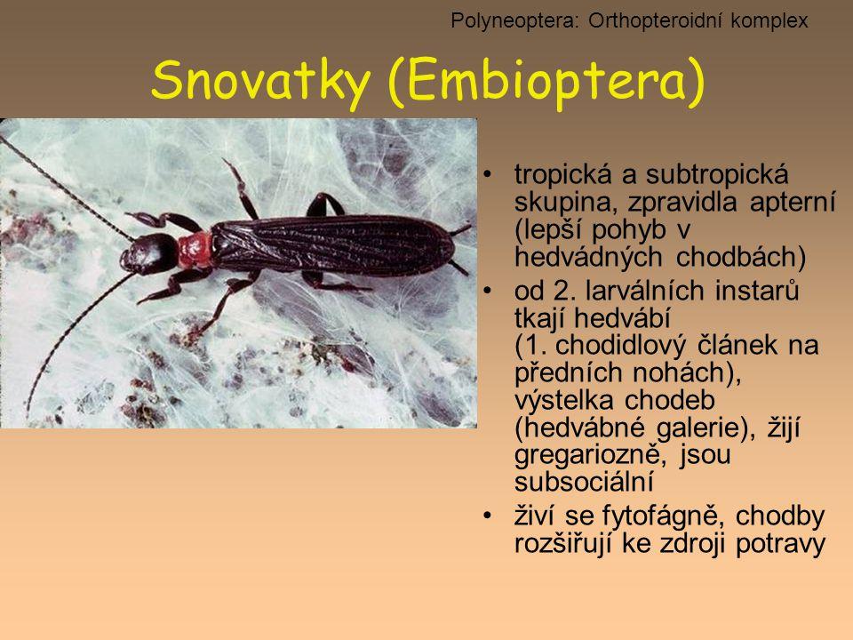 Snovatky (Embioptera) tropická a subtropická skupina, zpravidla apterní (lepší pohyb v hedvádných chodbách) od 2. larválních instarů tkají hedvábí (1.