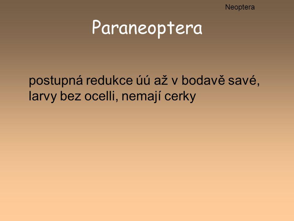 Paraneoptera postupná redukce úú až v bodavě savé, larvy bez ocelli, nemají cerky Neoptera
