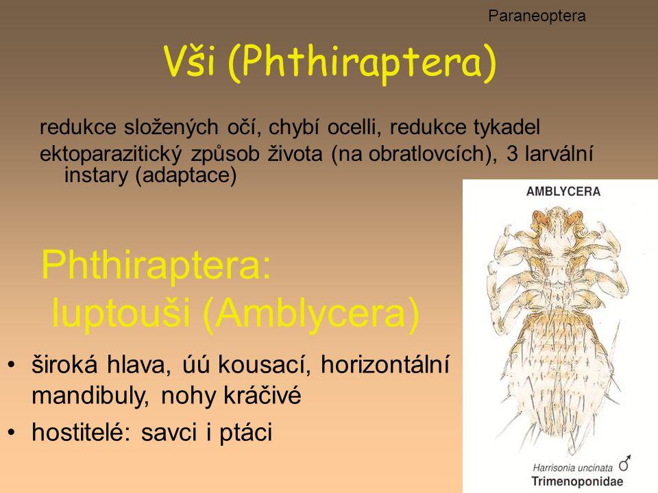 Vši (Phthiraptera) redukce složených očí, chybí ocelli, redukce tykadel ektoparazitický způsob života (na obratlovcích), 3 larvální instary (adaptace)