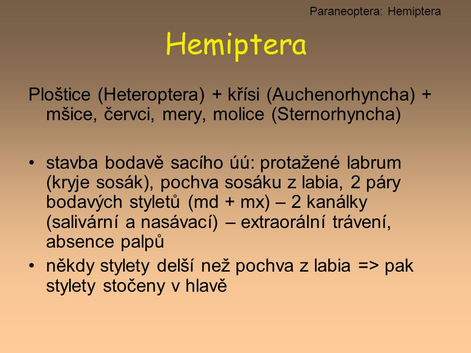 Hemiptera Ploštice (Heteroptera) + křísi (Auchenorhyncha) + mšice, červci, mery, molice (Sternorhyncha) stavba bodavě sacího úú: protažené labrum (kry
