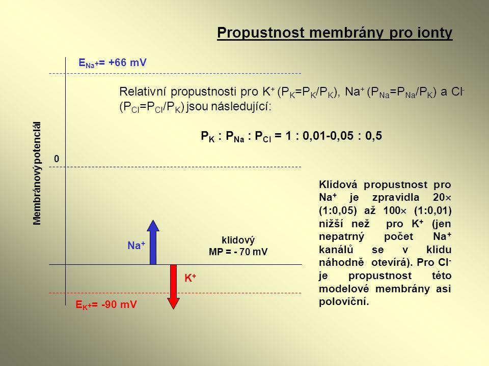 E K + = -90 mV E Na + = +66 mV klidový MP = - 70 mV Na + K+K+ 0 Membránový potenciál Relativní propustnosti pro K + (P K =P K /P K ), Na + (P Na =P Na