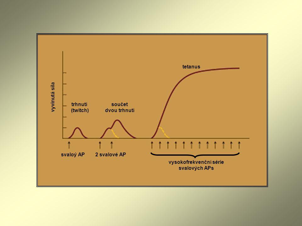 tetanus součet dvou trhnutí trhnutí (twitch) svaloý AP2 svalové AP vysokofrekvenční série svalových APs vyvinutá síla
