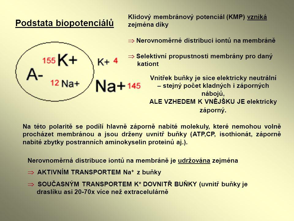 Vnitřek buňky je sice elektricky neutrální – stejný počet kladných i záporných nábojů, ALE VZHEDEM K VNĚJŠKU JE elektricky záporný. Podstata biopotenc