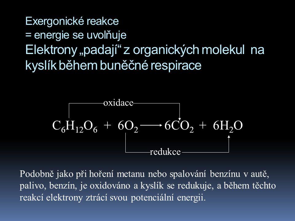 """Exergonické reakce = energie se uvolňuje Elektrony """"padají"""" z organických molekul na kyslík během buněčné respirace C 6 H 12 O 6 + 6O 2 6CO 2 + 6H 2 O"""